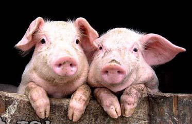 生猪期货首次期转现交割业务顺利完成  助力企业稳健经营