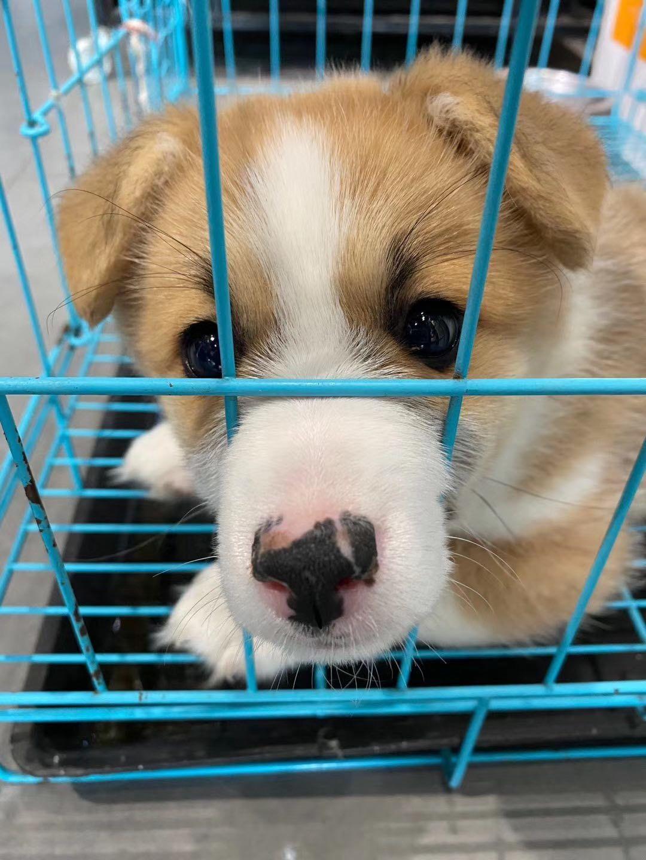 合肥成立文明養犬勸導隊 大力營造文明養犬濃厚氛圍