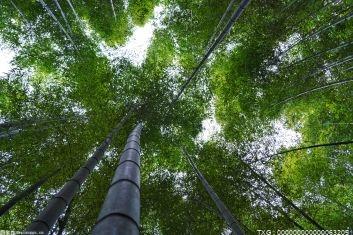 福建将开展林业碳中和试点建设 新增森林植被碳汇量50万吨以上